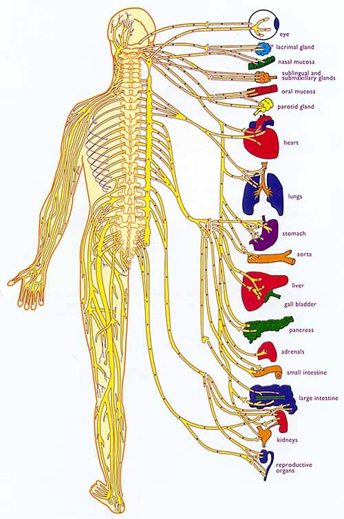 Infogram on the central nervous system